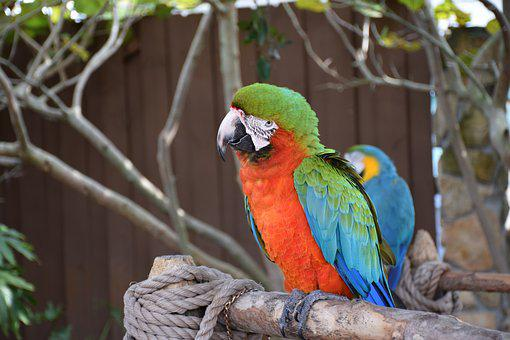 Macaw, Parrot, Bird, Colorful, Green, Red, Blue