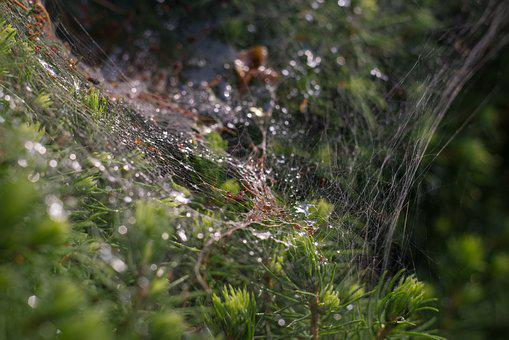 Spider's Web, The Spider's Nest, Drops Of Water, Bokeh