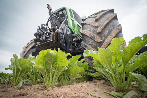 Sugar Beet, Agriculture, Tractor, Arable, Beets, Field