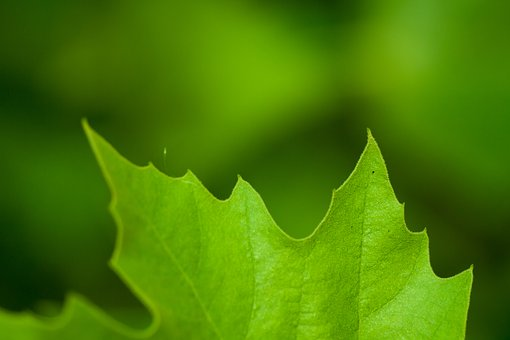 Letter, Green, Fresh, Detail, Spider Veins, Abstract
