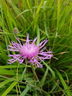 Blueberry, Flower, Nature, Violet, Wild Flowers