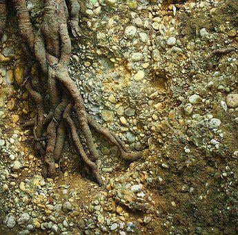 Tree, Nature, Root, Old, Forest, Plant