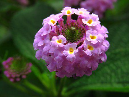 Round Flower, Colorful Flower, Beautiful Flower, Round