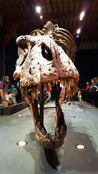 Dino, T, Rex, Trix