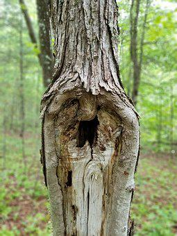 Tree, Face, Gandalf, Nature, Old Man, Forest, Head