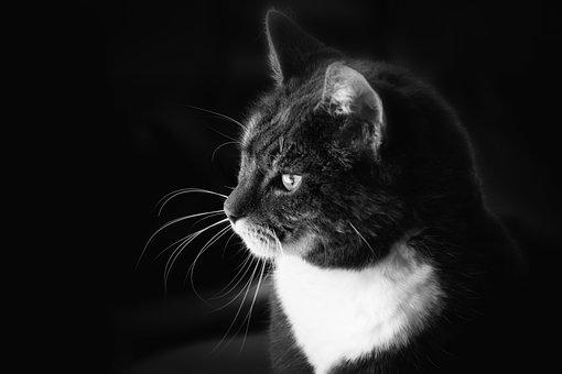 Black And White, B W, Cat, Bokeh, Close-up, Macro