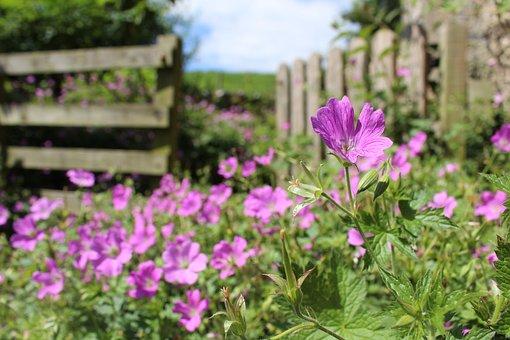 English Garden, Summer, Garden, Flowers, Pink