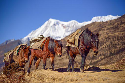 Bhutan, Mountain, Horse, Altitude, Landscape, Asia