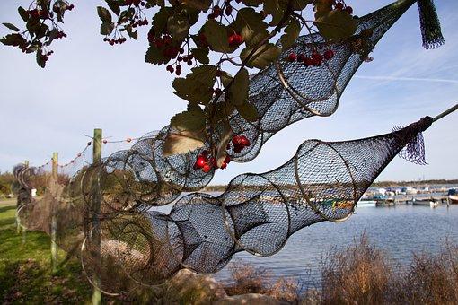 Eal, Traps, Drying, Fishery, Hvidovre, Harbour, Denmark