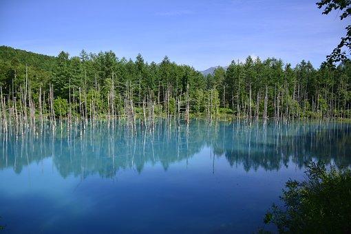 Japan, Water, Tree, Shirogane, Nature, Japanese