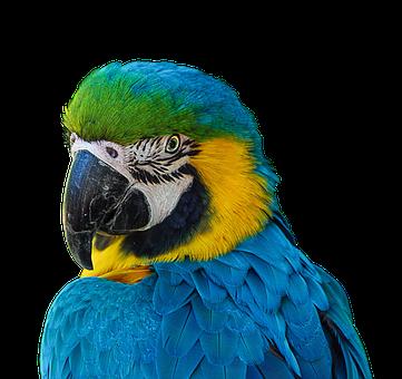 Parrot, Colorful, Plumage, Portrait, Blue, Ara, Feather