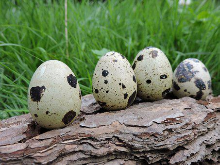Quail Eggs, Spotted, Lined Up, Bark, Meadow