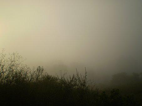 Fog, Sunset, Trasluz, Silhouettes