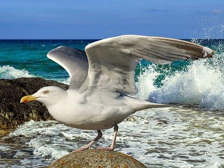Gull, Departure, Start, Bird, Wing, Take Off, Nature
