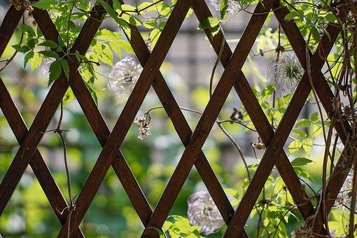 Trellis, Wooden, Gazebos, Vines, Climbing Plants