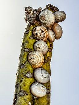 Cactus, Shells, Nature, Wildlife, Cohabitation