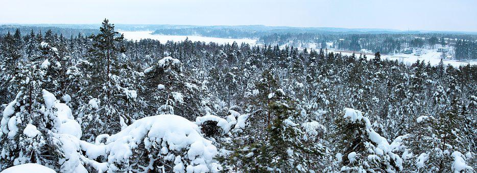 Panorama, Winter, Forest, Snow, Cold, Frozen, Ice