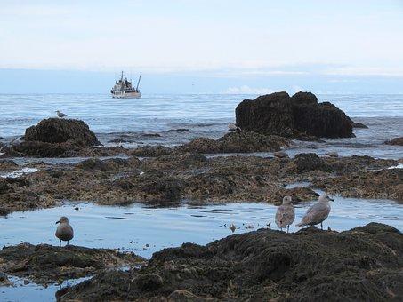 Bay, Ocean, Beach, Rocks, Stones, Gulls, Ship, Weed