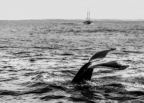 Sea, Ocean, Whale, Ship, Boat, Fins, Black And White
