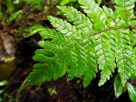 Fern, Plant, Jungle, Wildlife, Costa Rica, Travel