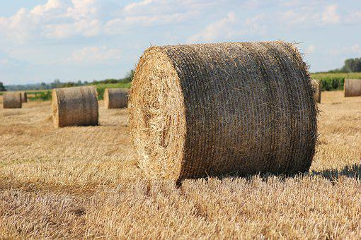 Straw Bale, 1000 Kg, Agriculture, Outdoor, Big, Round