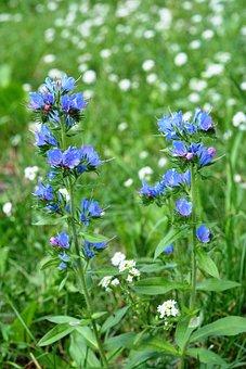 Flowers Wildflowers, A Flower Of The Field, Meadow