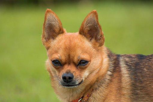 Dog, Puppy, Animal, Animals, Pet, Sweetness