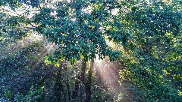 Enchanted Forest, Forest, Light, Sun, Sunlight, Beams