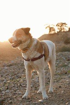 Dog, Nature, Fun, Lovely, Desert, Happy, Cute, Smile