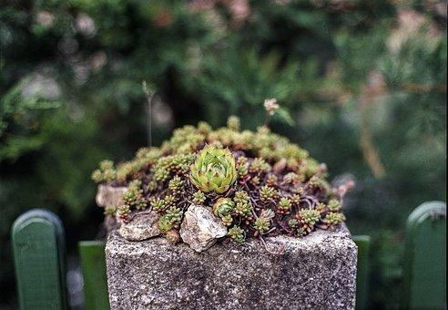 Stonecrop, Fence, Vintage, Decor, Worn, Floral