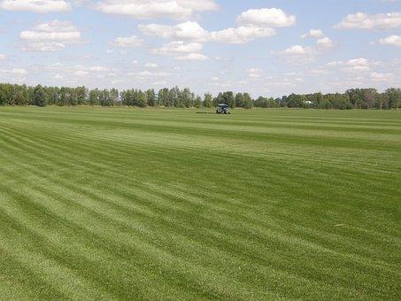 Sod, Farming, Ontario, Canada, Farm, Agriculture, Grass