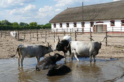 Puszta, Hungary, Tourism, Horses, Agriculture, Farm