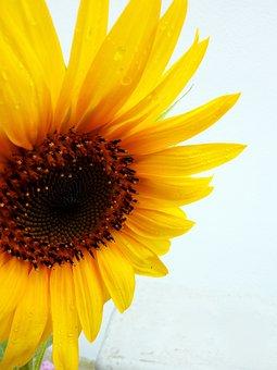 Sun Flower, Summer, Yellow, Blossom, Bloom, Flower