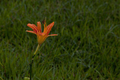 Nature, Plants, Leaf, The Leaves, Tabitha, Flowers