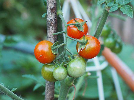 Tomato, Vegetables, Red, Food, Healthy, Datailaufnahme