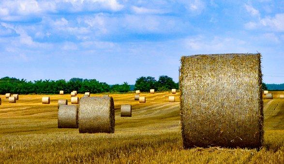 Field, Wheat, Harvest, Landscape, Grain, Summer, Meadow