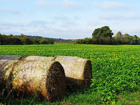 Field, Meadow, Hay, Green, Nature, Grass, Landscape