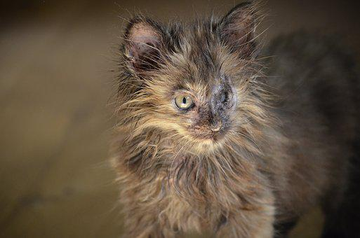 Handicap, Arm, Animal Welfare, Weak, Cat, Ill, Eye