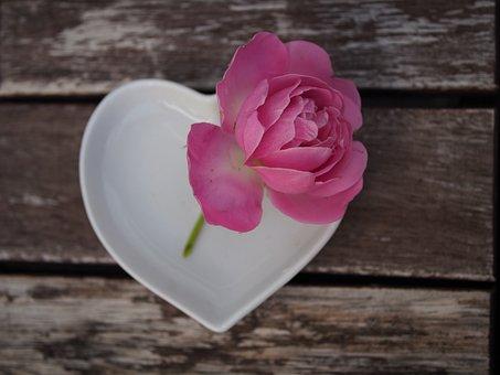 Rose, Pink, Heart, Love, Affection, Bloom, Gift
