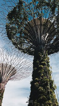 Wallpaper, Singapore, Nature, Asia, Green, Park