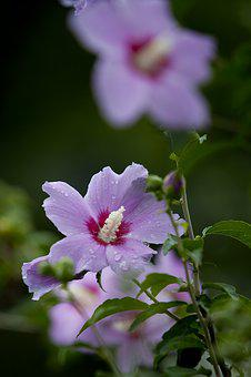Nature, Plants, Park, Flowers, Tabitha, Pool, Flower