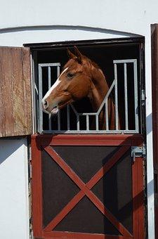 Horse, Animal, Head, Equine, Stable, Warmblood