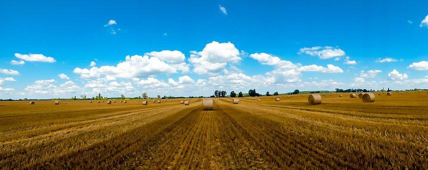 Straw, Straw Bale, Harvest, Field, Summer, Straw Bales