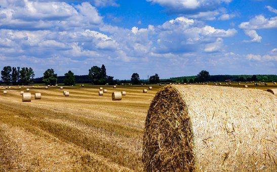 Straw Bale, Straw, Field, Straw Bales, Harvest