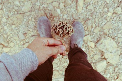 Travel, Plant, Desert, Nature, Tree, Landscape, Summer