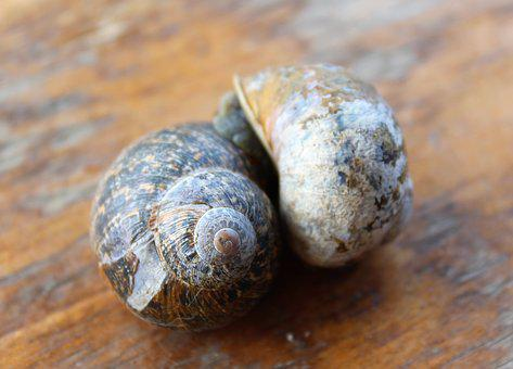 Together, Love, Two, Romance, Amour, Snail, Mollusc