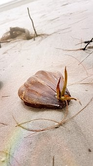 Beach, Shell, Sea, Summer, Sand, Travel, Vacation