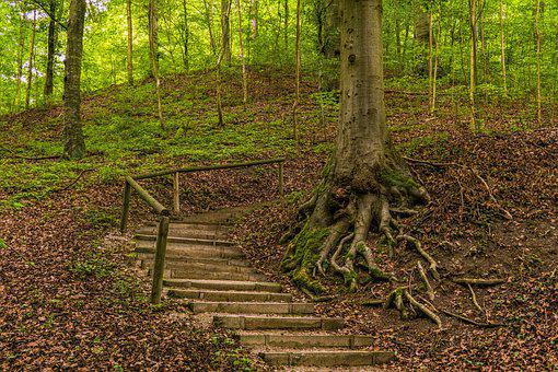 Forest, Away, Nature, Forest Path, Hiking, Trees, Trail