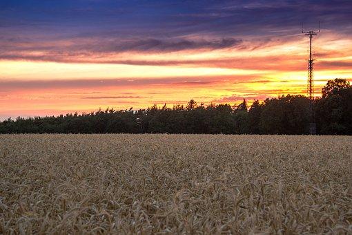 Beginning Of Summer, Cornfield, Sunset, Sky