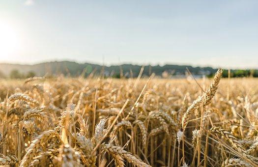 Field, Sun, Summer, Landscape, Garden, Nature, Fields